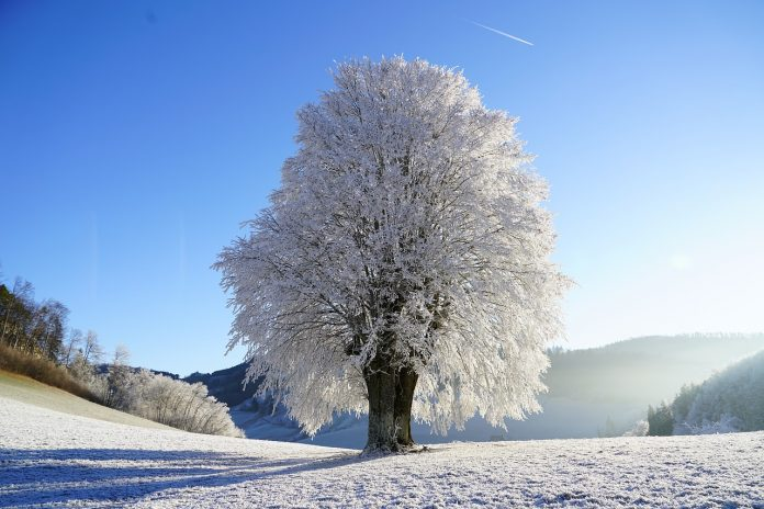Biobanking can cause significant freezing and thawing stress to cells.