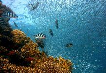 Coral larvae can be stored in biobanks.